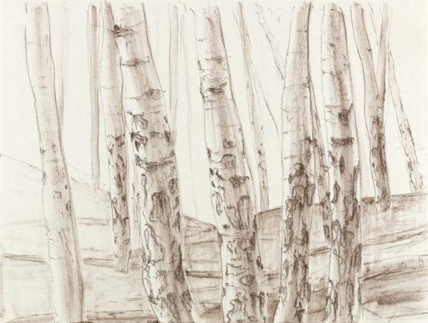 Birkenwald, Kreide auf Papier, 26x35cm, 2012