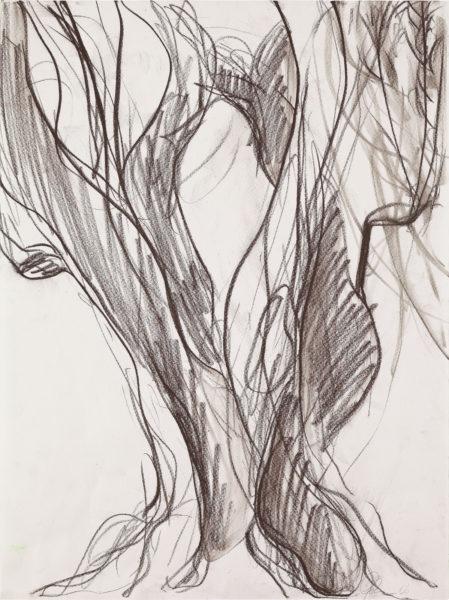 Olivenbaum, Kreide auf Papier, 48x36cm, 2006